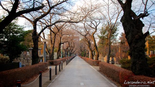 aoyama_graveyard- 010